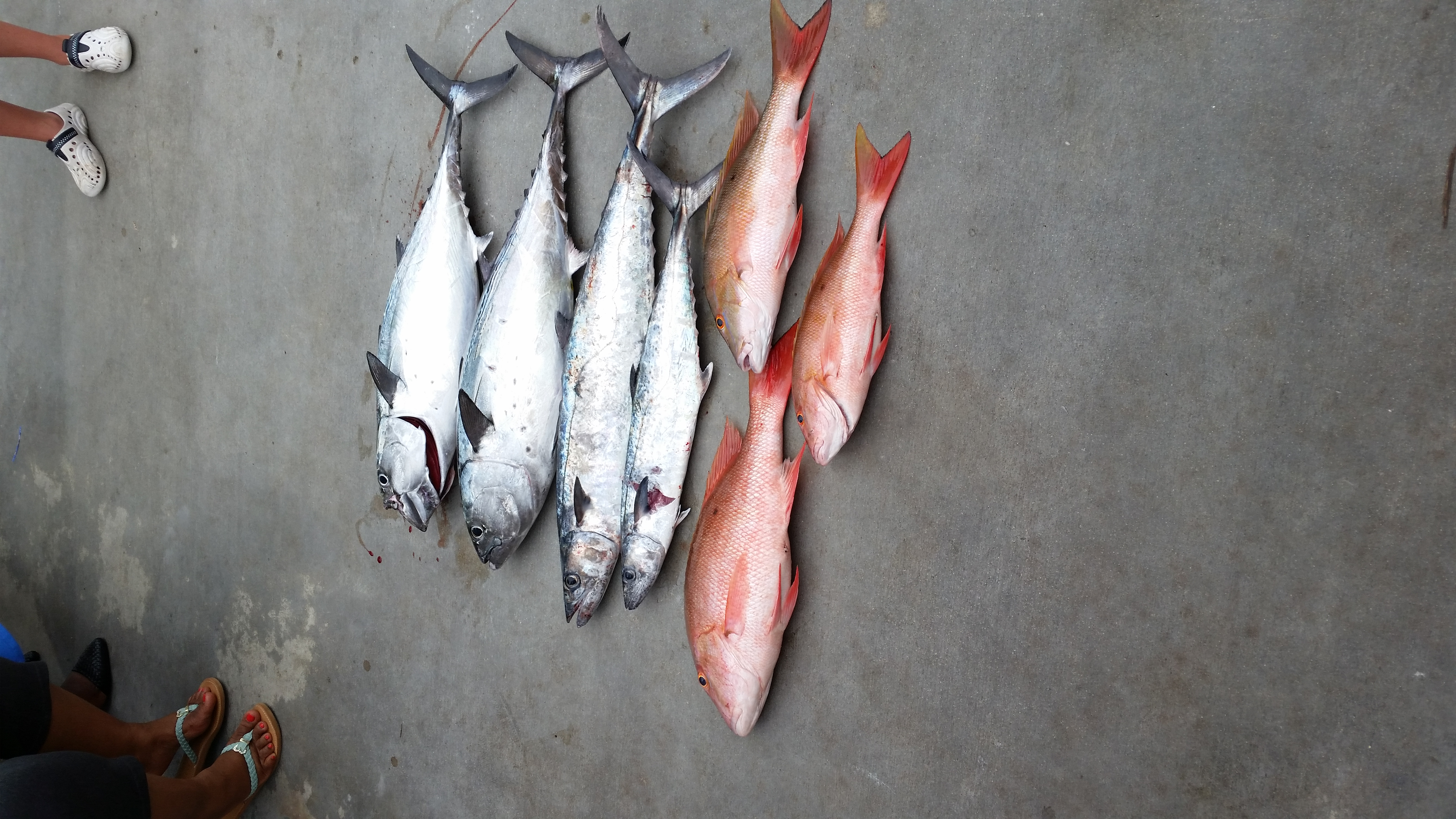 Tuesday, Juy 22, 2014 8am-12noon Mutton Snapper, Bonito, and King Makerel