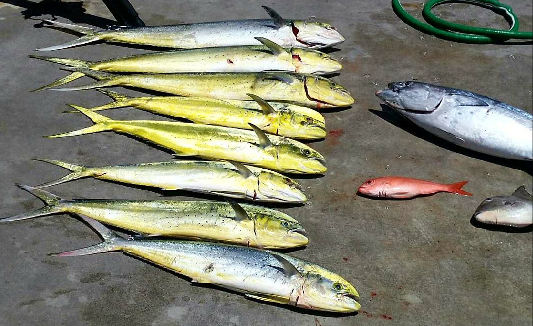 West palm beach fishing reports for Fishing charters west palm beach